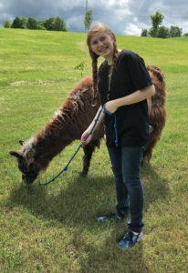 girl llama field