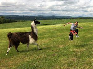 jumping girl llama